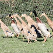 Járőrözés a kerítés mellett