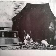 A bajkeverő macska
