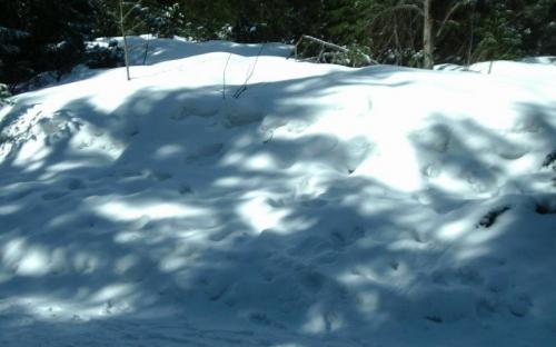 Egy lavina hófala
